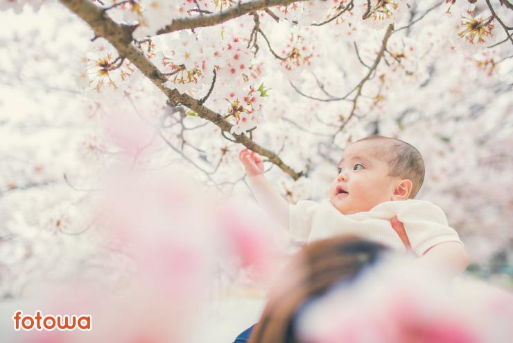 ハーフバースデーの写真撮影で桜を見つめる赤ちゃん